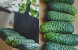 Parszywa Dwunastka Owoców i Warzyw!